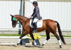 Winterlilie- 2nd Level, Hanoverian mare
