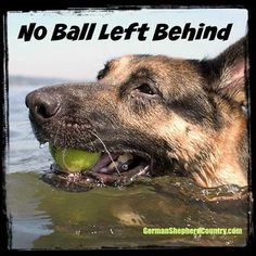 No Ball Left Behind