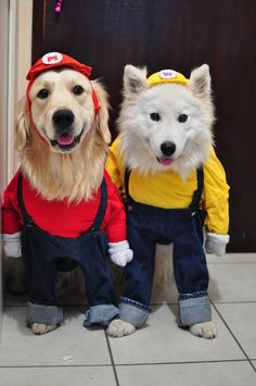 DIY cool dog costumes, Golden Retriever and Samoyed