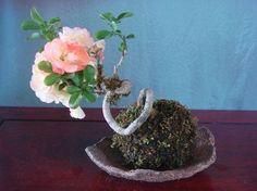 Come si realizza una pianta in stile kokedama