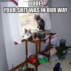 so true :)) #cat