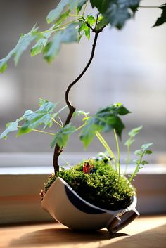 Maple bonsai with micro people. This photo was taken on May 17, 2012 using a Canon EOS 5D Mark II.