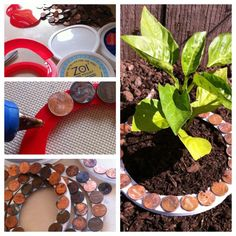 Using pennies on rings to keep slugs and snails off my plants! Copper actually shocks and kills them! They can sense the frequency and it keeps them away! Simply cut plastic lids into rings and make a slit that way you can place them around the stem of your plant! Hot glue pennies all around!