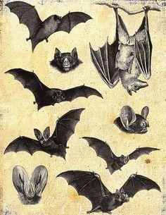 Batties!