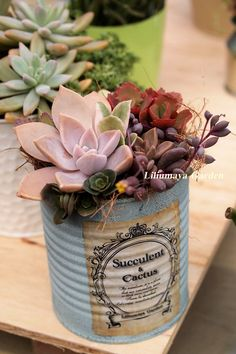 So pretty! I like the rustic look. succulents