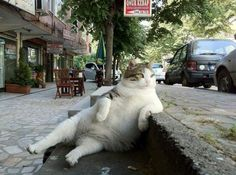 i love everything about this.    Canvas | Posted in Cute: Lazy Caturday
