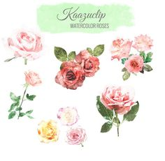 Check out Watercolor Rose Collection by Kaazuclip on Creative Market