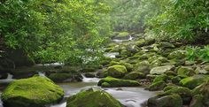 Roaring Fork, Great Smoky Mountains, Tennessee, USA
