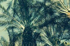 Palm Springs 2013 Palm Springs, Plants, Photography, Travel, Fotografie, Photography Business, Photo Shoot, Viajes, Plant