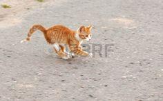 Red little kitten play on road on sunny day on summer