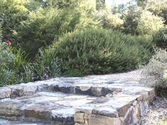 Bulli Garden Design by Mallee Design Australian Native Gardens