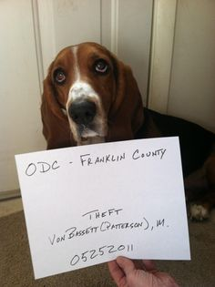 Charged with 1st Degree Burglary http://www.dogshaming.com/2013/06/charged-with-1st-degree-burglary/