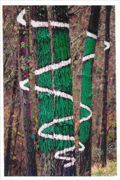 AGUSTIN IBARROLA, la feliz unión de árboles y poesía.
