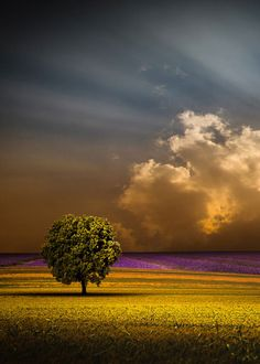 enantiodromija: *** by stefano giacomini on imgfave