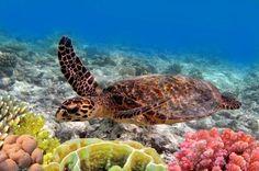 #Turtle #Ocean