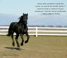 """Friesian mare- When God wanted to create the horse, he said to the South Wind, """"I want to make a creature of you. Condense."""" And the Wind condensed. -Emir Abd-el-Kader"""