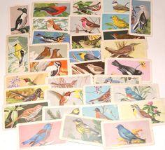 Red Rose Tea Cards Grab Bag of 32 Vintage Birds for scrapbooking, collage, crafts Red Rose Tea, Vintage Birds, Bird Design, Grab Bags, Childhood Memories, Red Roses, Tea Time, Bond, Card Making