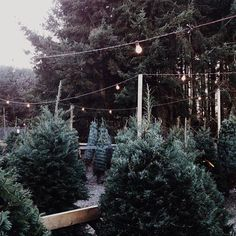 It's almost time to pick the perfect tree! Getting prepared for the Christmas season.