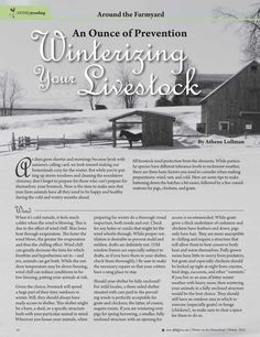 An Ounce of Prevention: Winterizing Your Livestock—By Athene Lollman Molly Green - Winter 2015-2016 - Page 10-11
