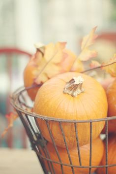 pumpkin days by lucia and mapp, via Flickr