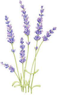 Lavender | par Big Print Little