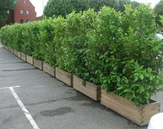 Screening plants in planters to contain growth when dealing with bamboo hedges Privacy Planter, Garden Privacy, Fence Planters, Backyard Privacy, Garden Shrubs, Balcony Garden, Backyard Landscaping, Hedges For Privacy, Bamboo Planter