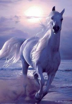 White horse on beach - I have this poster in 3D
