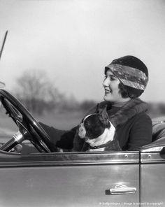 Noir et blanc White and black French Bulldog Terrier Breeds, Terrier Puppies, Pugs, Boston Terrier Love, Boston Terriers, Art Deco, Vintage Dog, Vintage Cars, Vintage Photographs