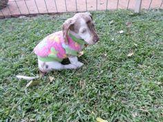 Charlotte10 8 Weeks, Adoption, Charlotte, Dads, Africa, Super Cute, Puppies, Eye, Check