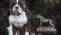 Grand Champion Beastro is offically crowned 2013 Top Dog