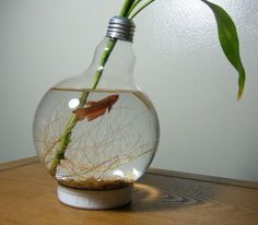 Every one love the fishes. I also love the fishes. You are currently watching here the ideas of DIY Fish Aquarium Projects. Do you know about 7 DIY Fish Light Bulb Fish, Plant Cuttings, Plant Pots, Creation Deco, Deco Design, Do It Yourself Home, Everyday Objects, Betta Fish, Bricolage