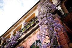 #glicine #wisteria #portofino #hotelsplendido