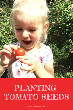 Planting Tomato Seeds Why we plant seeds on Valentine's day, and how to plant seeds with your kids Local Butcher, Garlic Roasted Potatoes, Little Gardens, Tomato Seeds, Sauteed Mushrooms, Fancy Desserts, Tomato Plants, Family Traditions, Planting Seeds