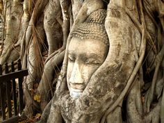 #ancient #art #asia #asian #buddha #buddhism #buddhist #culture #face #famous #fence #landmark #roots #sculpture #statue