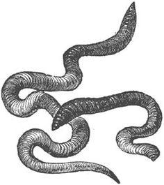 sketch: earthworm | Nature Study | Earthworms, Worm ...