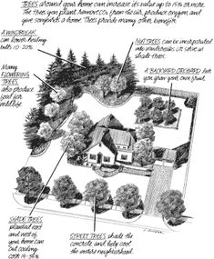 Tree placement in home landscaping. Landscaping Around House, Privacy Landscaping, Home Landscaping, Front Yard Landscaping, Landscaping Company, Pergola Design, Trellis Design, Trees And Shrubs, Trees To Plant