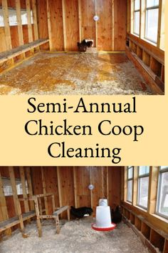 """Semi-annual chicken coop cleaning describes the steps involved in chicken coop cleaning when using the """"deep litter"""" method for managing coop sanitation. Chicken Coup, Best Chicken Coop, Chicken Coop Plans, Chicken Feed, Building A Chicken Coop, City Chicken, Small Chicken, Backyard Poultry, Chickens Backyard"""
