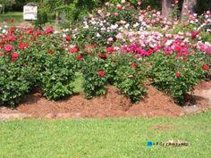 Rose Garden Ideas rose garden ponds google search Gardeningrose Garden Ideas Garden Garden Ideas Rose Garden Tips And Plans Ideas