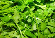 Cilantro Purifies Drinking Water in Developing Countries - Cheaply and Sustainably | Inhabitat -
