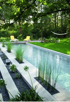 #droughttolerant #planting #woodsreens #landscapedesign #garden #cabana #poollounge #outdoorlivingspaces #ornementalgrasses #modern #landscape #grasses #landscaping #urbanliving #pool    I     www.toolboxsf.co
