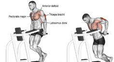 6 Triceps Workouts – Best Tricep Exercises for Beginners at the Gym Best Tricep Exercises, Triceps Workout, Gym Workouts, Workout Exercises, Exercise Workouts, Gymnastics Workout