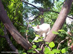 Gato cazando pájaros.