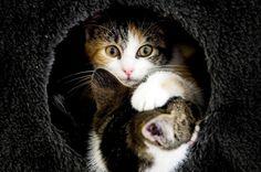 Котки си играят в приют за животни в Утрехт, Нидерландия.