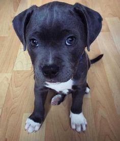 pictures of a cute puppy striking a pose.  #puppy #cute #doglover #barkinglaughs