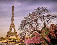 Spring Blossoms, Paris, France