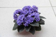 Virtual Violet :: Просмотр темы - Ness' Crinkle Blue  (D.Ness)