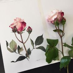 2nd day demonstration in Cannes.  Today we learned about one-layer technique, it's like sketching. 15-20 minutes painted. :-) #watercolor #paint #painting #art #artist #rose #sweet #Cannes #Francephatcharaphan_artist