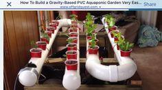 Aquaponic garden
