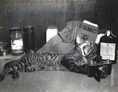 "The life of ""Combat the Cat,"" the mascot of US Marine combat photographer William H.T. Swisher, c. 1945 ~"