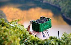 España continúa teniendo la mayor superficie de viñedo del mundo, 1,05 millones de Hectáreas http://www.vinetur.com/2013103113787/espana-continua-teniendo-la-mayor-superficie-de-vinedo-del-mundo-105-millones-de-hectareas.html